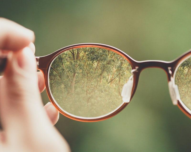 lunettes_arbre_lunettesdemaja